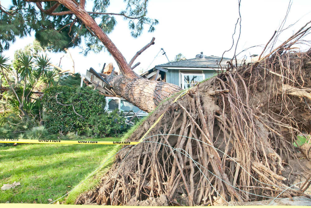 When Storm Damage Impacts Your Carlsbad Home, Get Professional Cleanup Help