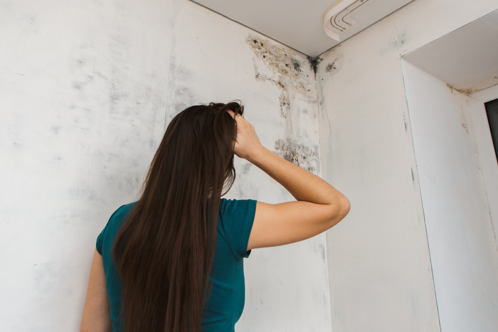 Stop Mold In Your Campo Home In Its Tracks